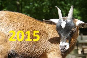 коза, новый год, 2015