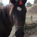 лошадь, фото