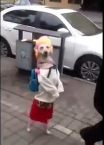 Китай, мода, собака