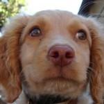 За любимую собаку китаянка готова отдать свой дом