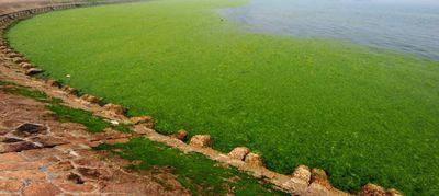 водоросли, море, атака