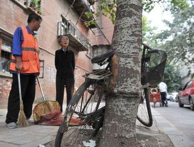 велосипед, дерево, Китай
