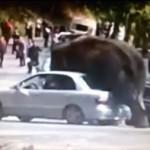 Слон из ревности громит машины людей (видео)