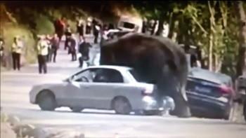 слон. авто, ревность