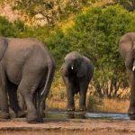 Нелегальный слон пресек КПП на границе Китая (видео)