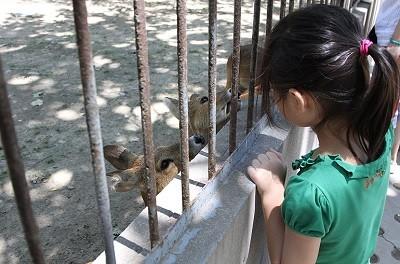 зоопарк в Китае,