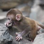Клонирование обезьян в Китае угрожает будущему человека?