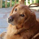 Собака, которая любит овощи удивляет хозяина (видео)