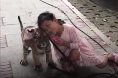 девочка, тигренок,