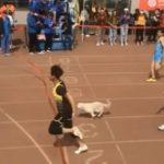 Бездомная собака решила участвовать в забеге на 100 метров