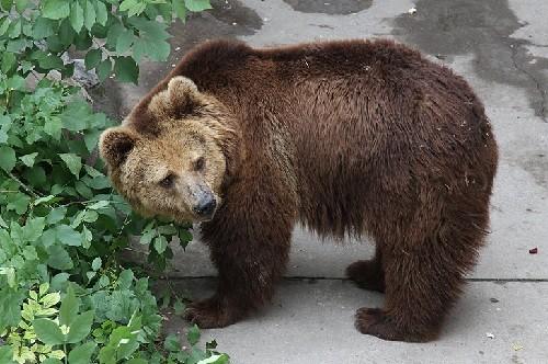 медведь, животное, медвежонок,