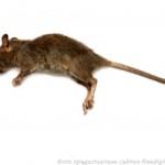 Фальшивое мясо из крыс производили в Китае