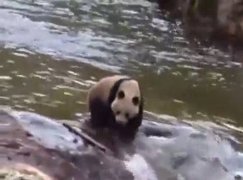 панда, Китай, туристы