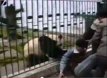 панда, Китай, зоопарк