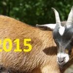 Что принесет удачу в год Козы