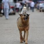 Власти Тайваня запретили убийство кошек и собак ради мяса