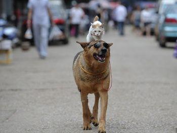 кошка, собака, прогулка