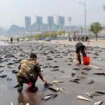 Сотни живых сомов перекрыли движение машин (видео)