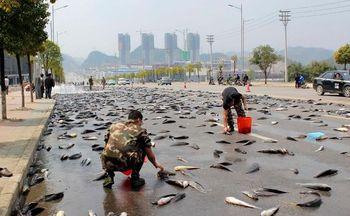 рыба, дорога, происшествие