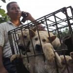 Фестиваль собачьего мяса вновь открылся в Китае