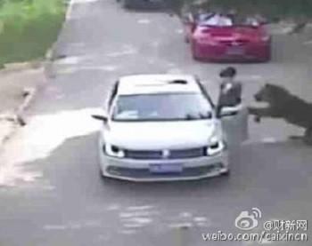 тигр, нападение, парк, Китай