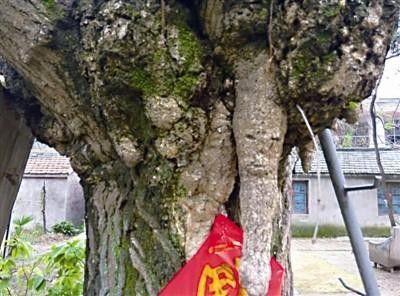 лицо, дерево, Китай,