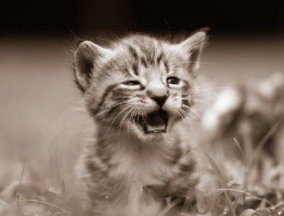 котенок, животные.