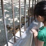 Почему белый тигр в китайском зоопарке ест землю