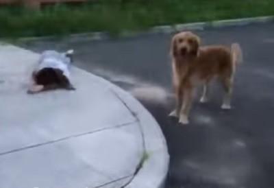 верная собака,