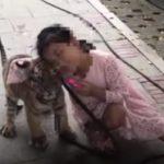 Дружба девочки и тигрёнка поразила китайцев (видео)