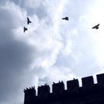 Зачем китайцу почтовый голубь за 1,25 млн евро