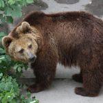 Необычное спасение медвежонка сняли на видео