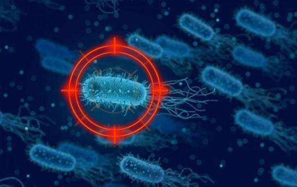 чума, Китай, бактерии,