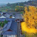 Реликтовое дерево в буддийском храме удивляет своей красотой