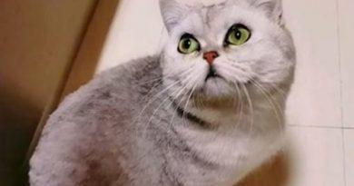 кошка без хозяев, Китай,