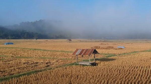 китайский фермер, урожай,